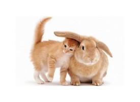 Kunić – klempav, pufnast i umiljat ljubimac