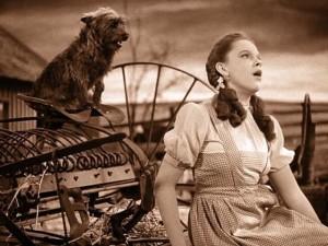 Toto Carobnjak iz Oza
