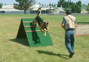 Nemacki ovcar, Schutzhund