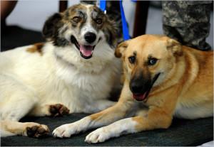 Rufus (levo) i Target (desno)