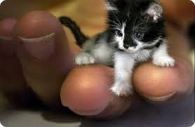 najlaksa macka