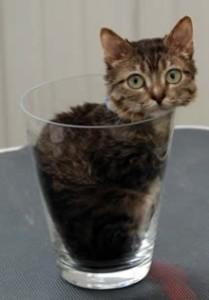 najmanja maca