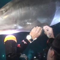 Delfin prilazi roniocima u molbi za pomoć (VIDEO)