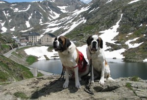 Grand Saint Bernard