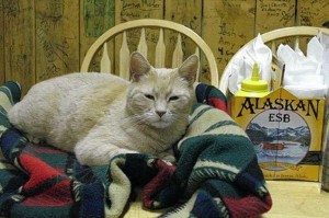 mačak gradonačelnik Aljaska