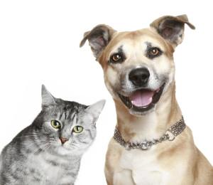 pas i macka govor tela