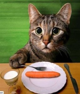 cat_carrot_smaller