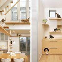 Cat friendly stanovi