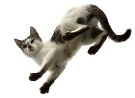 10 najvećih zabluda o mačkama