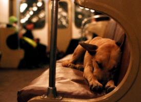 10 zanimljivih informacija o psima