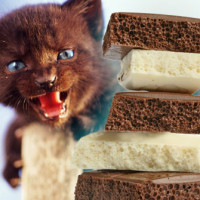 Hrana koja ne prija mačkama