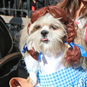 Doroti - Čarobnjak iz Oza