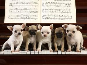 Mali psi
