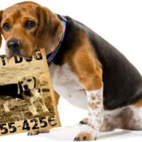 Kako pronaći izgubljenog psa?!