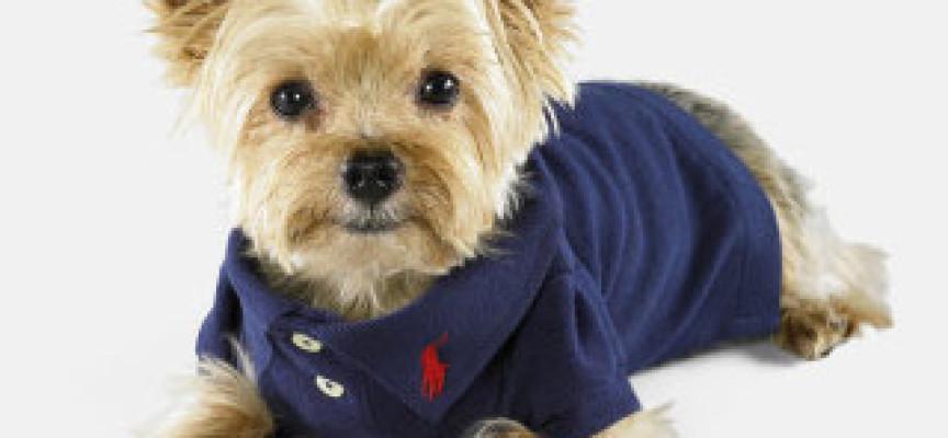 Napušteni psi zvezde kolekcije modne kuće Ralf Loren