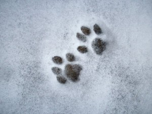 Sape u snegu