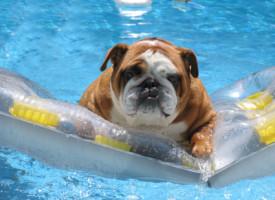 Psi kojima plivanje nije jača strana