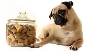 dog-treats-594x395