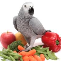 Ishrana papagaja