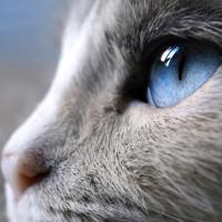 Kako mačke vide svet oko sebe?