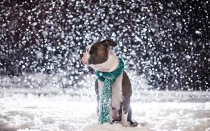 pas na snegu
