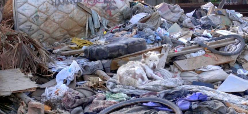 Neverovatna priča: Pas spašen sa deponije (VIDEO)