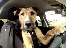 Saveti za (lakše) putovanje sa psom