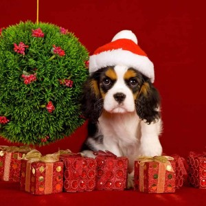 Dogs-Christmas-Wallpapers2