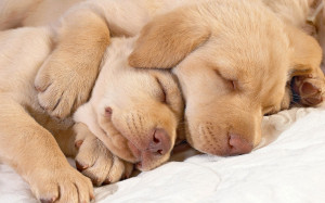 cute-sleep-dog-pic