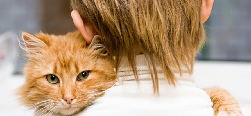 Kako mačka pokazuje ljubav i privrženost?