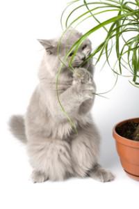 macka biljke u kuci