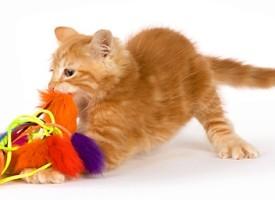 Obezbedite mački prijatan, zanimljiv i siguran prostor u stanu