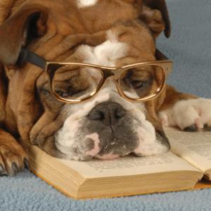 pametni psi 2