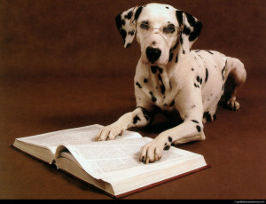 pametni psi