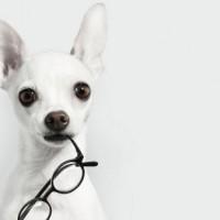 Inteligencija pasa – najpametniji psi