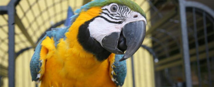 5 razloga da se odlučite za papagaja kao kućnog ljubimca