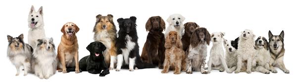 razni psi