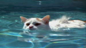 turska van u vodi