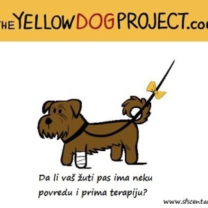 13. Slika - povređen pas