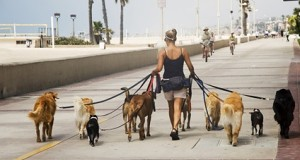 45-dog-walker-leash-DT-425km071411
