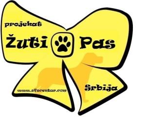 7.a. Žuti Pas - žuta mašna na srpskom