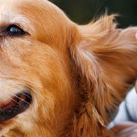 7 najčešćih grešaka vlasnika pasa