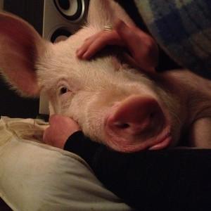 ester the wonder pig 4