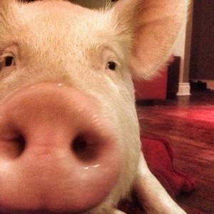 ester the wonder pig 5