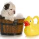 Kupanje psa: 5 saveta da kupanje vašeg ljubimca bude manje stresno