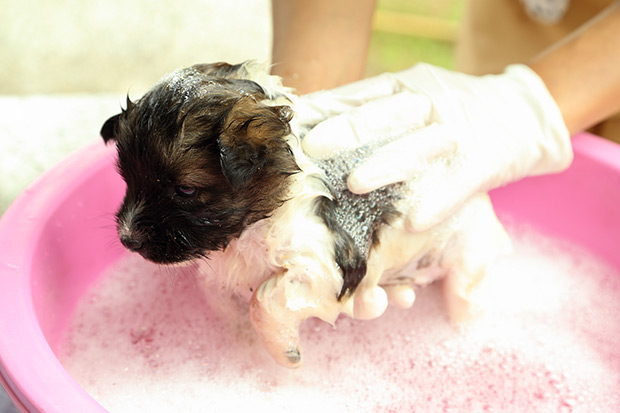 kupanje psa 4
