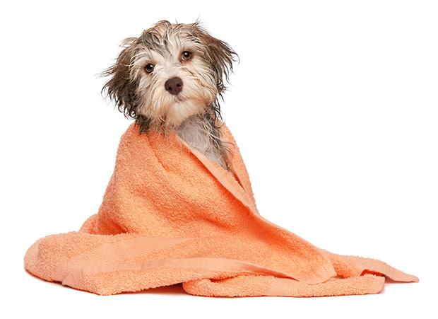 kupanje psa 5
