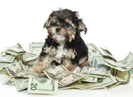 7 papreno skupih rasa pasa i mačaka