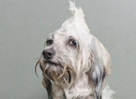 Šta psi misle o kupanju?