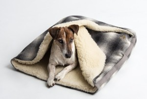 Pawsh-Magazine-dog-sleeping-bag-3